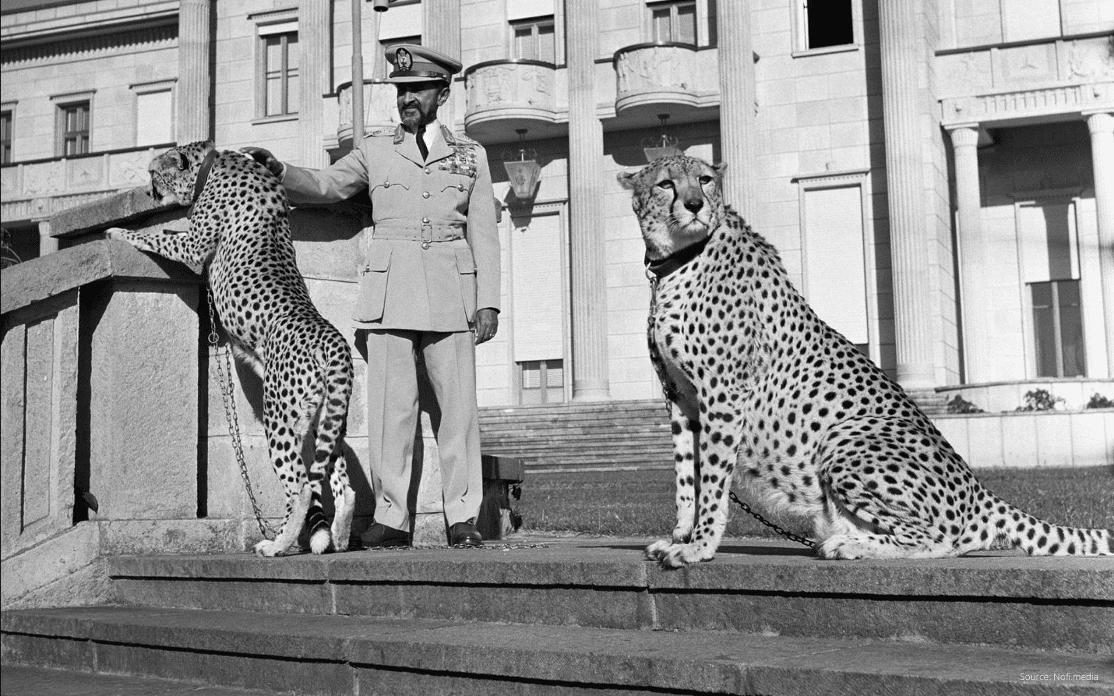 L'empereur Haile Selassie avec debout sur les marches de son palais accompagné de deux leopards