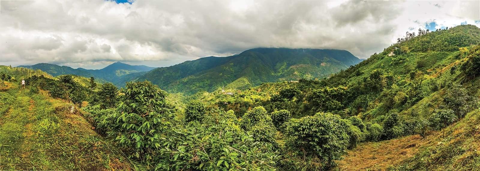 Montagnes de la Jamaïque